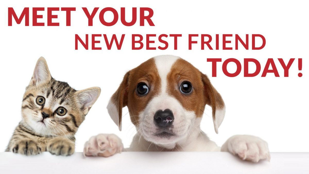 HOMELESS CATS AND DOGS IN NEED OF FOREVER HOMES – Ocean